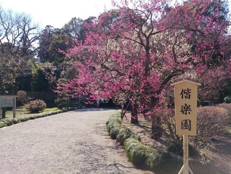 茨城のおすすめ観光スポットまとめ:茨城県をとことん遊び尽くしたい!!