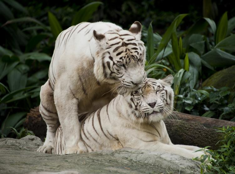 シンガポール動物園・家族みんなで楽しむ!アクセス良のおすすめホテル4選