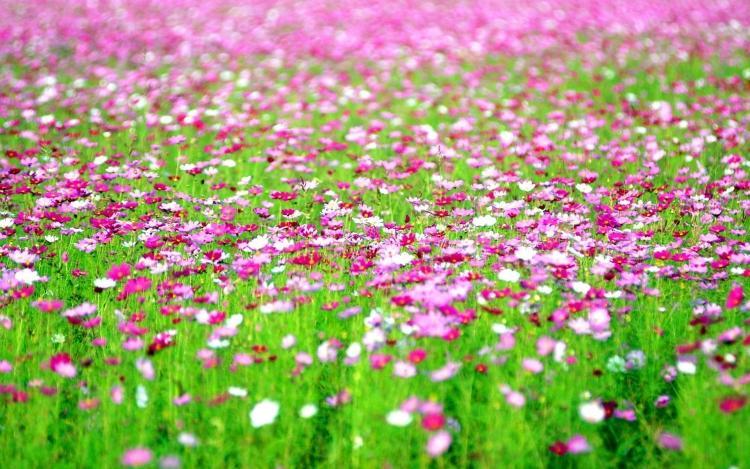 【千葉】見渡す限り花畑が広がる房総半島の観光地5選