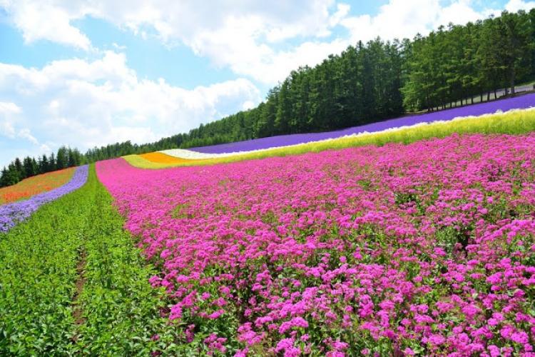 【北海道】ラベンダーだけじゃない! 富良野・美瑛周辺の定番観光スポット10選