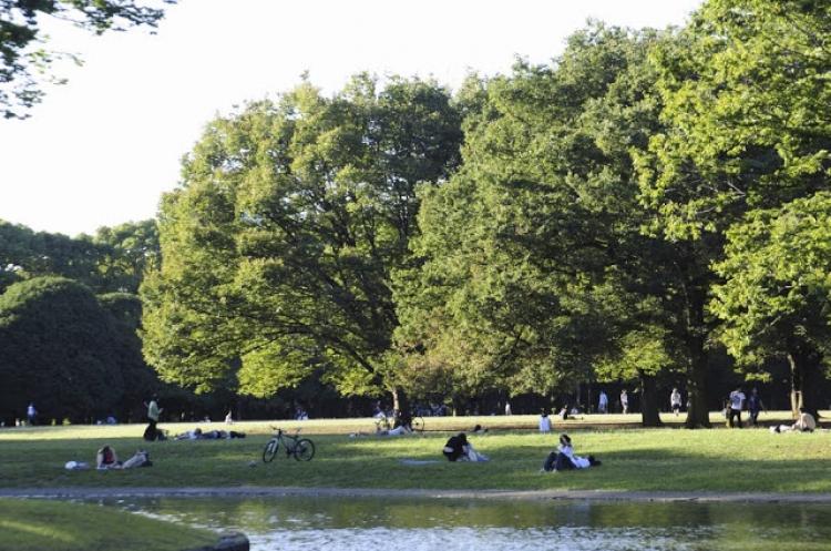 【東京】お弁当を持ってピクニックに出掛けたくなる都内の公園5選