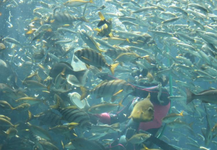 【静岡】たくさんのショーが魅力的な入り江に浮かぶ「下田海中水族館」