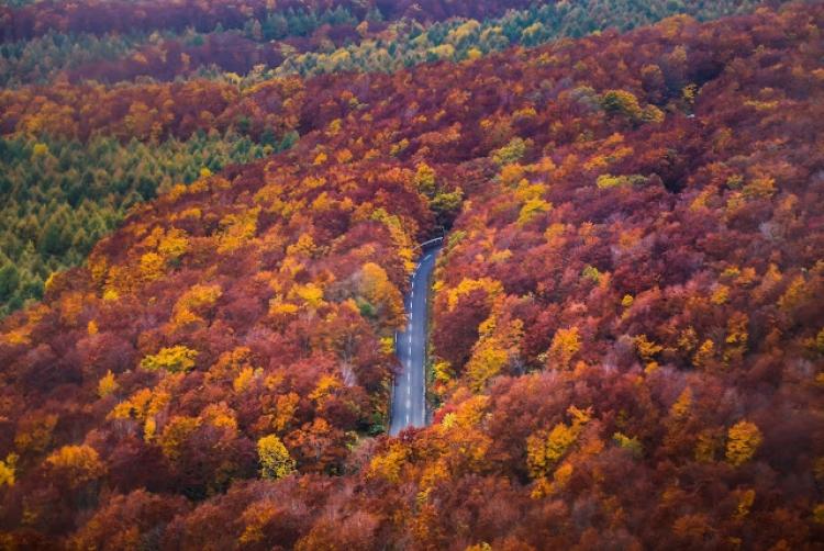 東北の紅葉名所ツアー、赤じゅうたんの広がる絶景の登山スポットまとめ