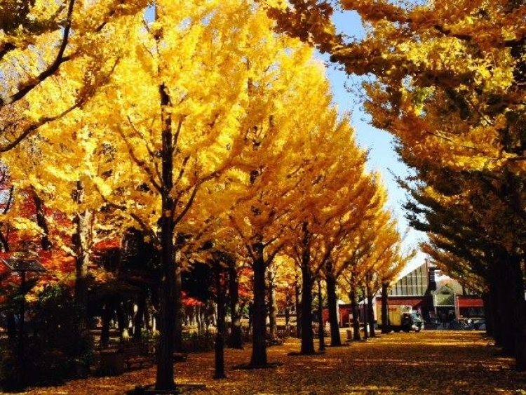 【茨城】つくば市で家族旅行やデートにぴったりの定番観光地5選