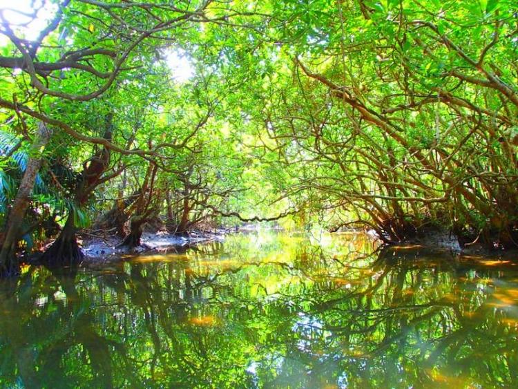 ビーチだけじゃない!沖縄で緑豊かな自然を楽しめる観光スポット5選