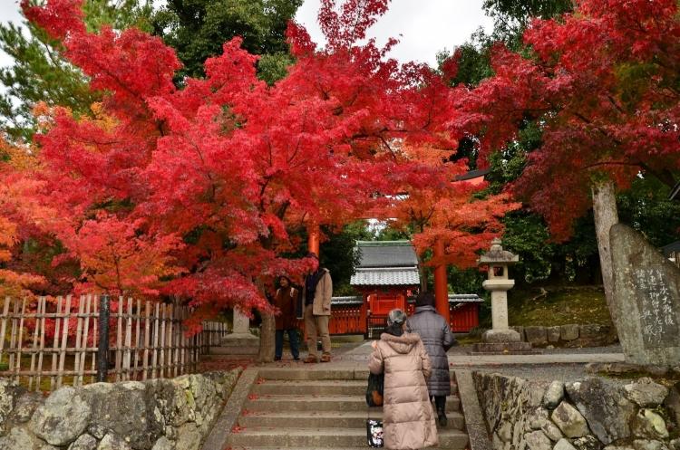 【岐阜】露天風呂に浸かりながら紅葉の絶景を楽しめる人気の宿5選