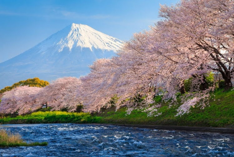 静岡観光のおすすめ旅行ガイド